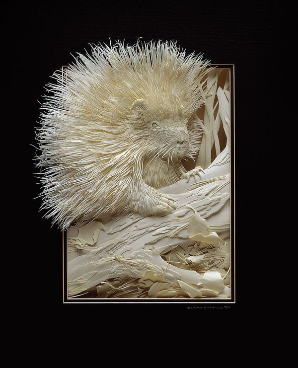Porcupine in paper