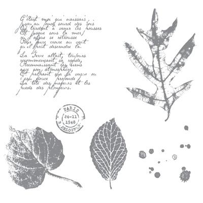 Fr. Foliage