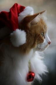 Chr. cat
